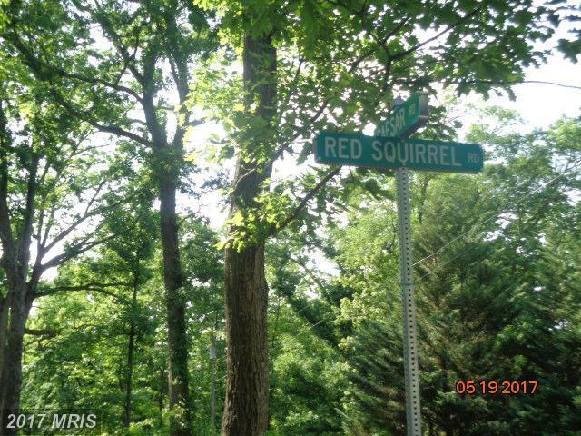 Red Squirrel Lane, Harpers Ferry, WV 25425 (#JF9949984) :: LoCoMusings