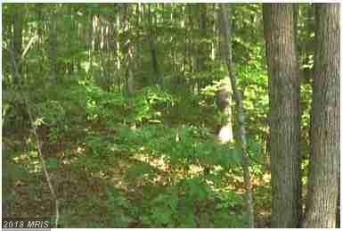 32850 Jackson Loop, Locust Grove, VA 22508 (#OR10151470) :: Green Tree Realty