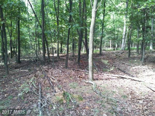 Stumpy Lane, Fort Loudon, PA 17224 (#FL9775352) :: LoCoMusings