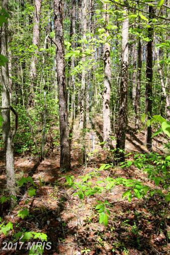 0 Plum Tree Road, Mineral, VA 23117 (#LA8650285) :: Pearson Smith Realty