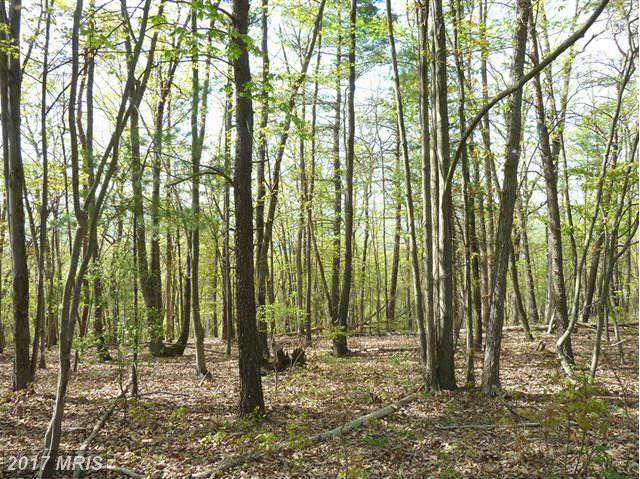 0 Supinlick Ridge Road, Mount Jackson, VA 22842 (#SH8070535) :: Pearson Smith Realty