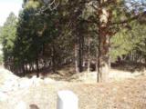 447 Pine - Photo 3