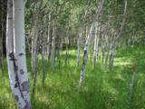 LOT 11 Aspen Lookout Loop - Photo 7