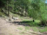 11396 Nevada Gulch Road - Photo 1