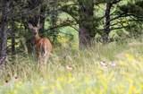 Vista Meadows 5 Elk Run Road - Photo 28