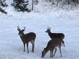 21850 Big Elk Place - Photo 32