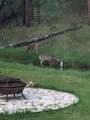 21850 Big Elk Place - Photo 4
