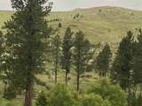 TBD Custer Limestone Road - Photo 20