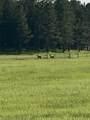 11952 Lone Elk Drive - Photo 10