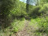 Cutting Mine Road - Photo 7