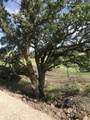 3922 Twisted Oak Road - Photo 1