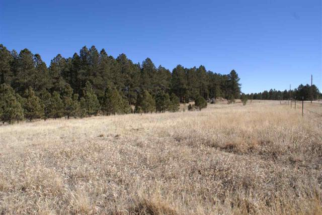 TBD Last Stand Road, Custer, SD 57730 (MLS #49006) :: Christians Team Real Estate, Inc.