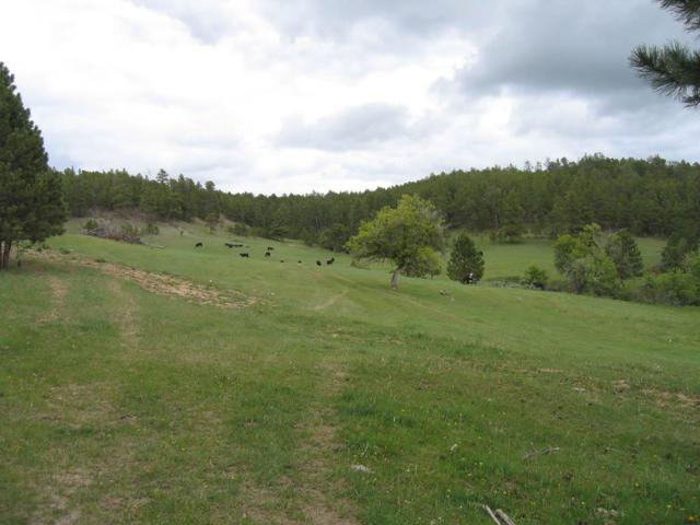 TBD Ruger Rd., Sundance, WY 82729 (MLS #49234) :: Christians Team Real Estate, Inc.