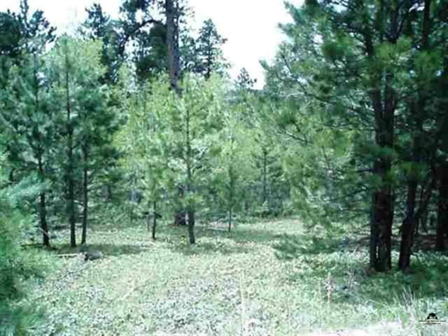 LOT 21 Whale Road, Deadwood, SD 57732 (MLS #52041) :: Dupont Real Estate Inc.