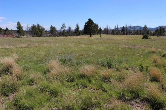25451 Mountain Shadow Rd., Custer County, SD 57730 (MLS #57431) :: Christians Team Real Estate, Inc.
