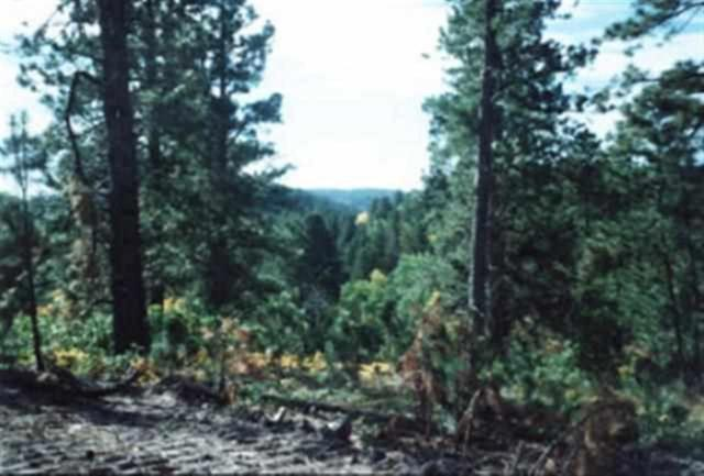 LOT 14 Belle Fish Ii, Deadwood, SD 57732 (MLS #57739) :: Christians Team Real Estate, Inc.