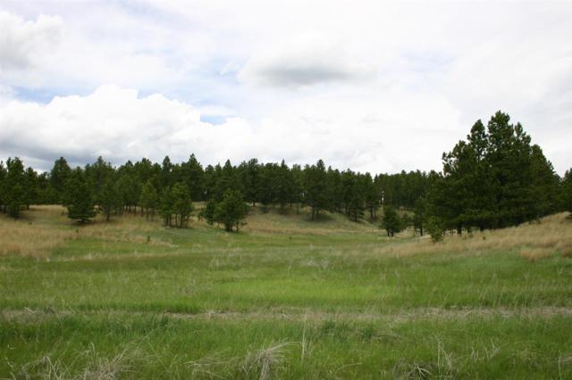 TBD Lot 24 Mountain Lion Lane, Custer, SD 57730 (MLS #58032) :: Christians Team Real Estate, Inc.