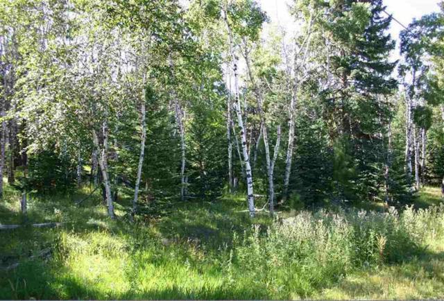 21639 Legal Tender Trail, NEMO, SD 57759 (MLS #59459) :: Christians Team Real Estate, Inc.