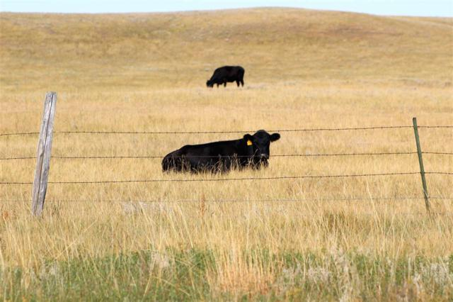 TBD Nine Mile Road, Sturgis, SD 57785 (MLS #59742) :: Christians Team Real Estate, Inc.