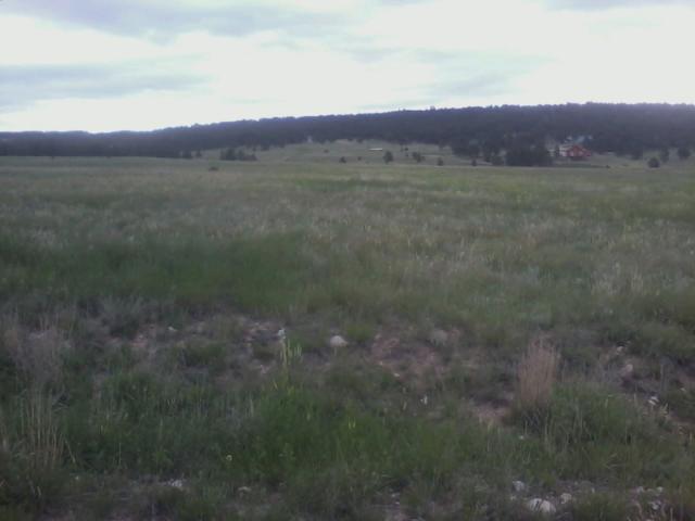 TBD Turkey Trail, Edgemont, SD 57735 (MLS #60819) :: VIP Properties