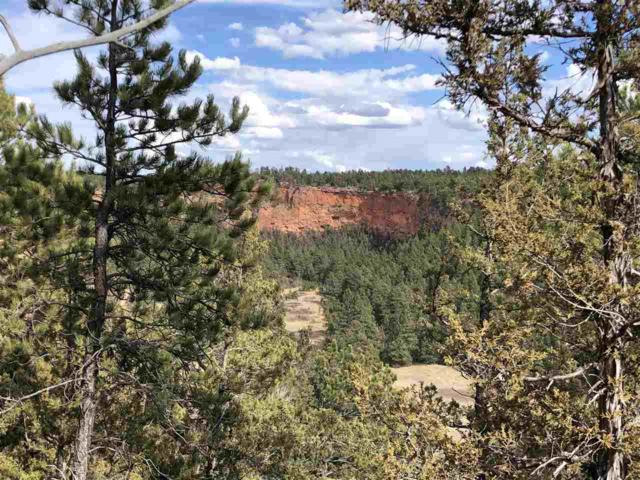 TBD Farmer Road, Custer, SD 57730 (MLS #61364) :: VIP Properties