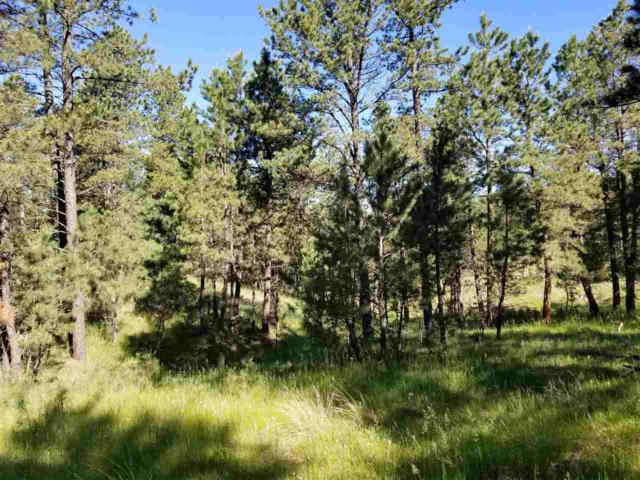 TBD Hwy 89, Custer, SD 57730 (MLS #61823) :: Christians Team Real Estate, Inc.