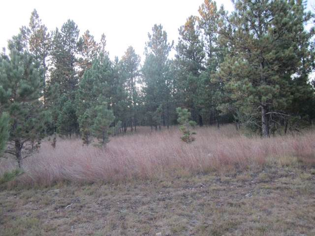 Tr 53 Hickock Drive, Hot Springs, SD 57747 (MLS #62869) :: Dupont Real Estate Inc.