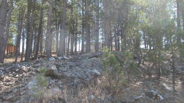 TBD Pine Mountain Avenue, Hill City, SD 57745 (MLS #63700) :: VIP Properties