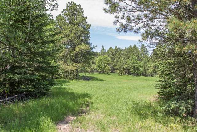 LOT 1 Tiger Road, Lead, SD 57754 (MLS #65045) :: Dupont Real Estate Inc.