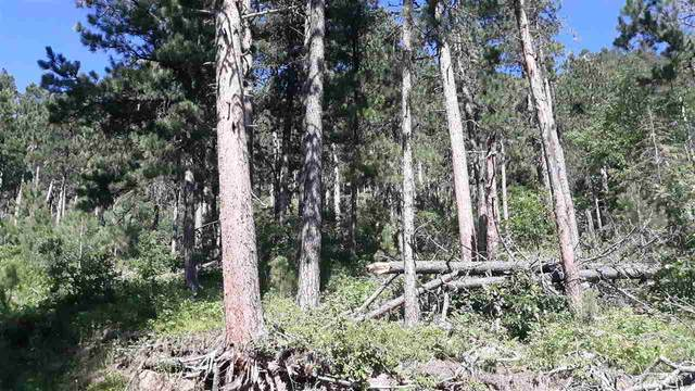 Lot B-7 Address Not Published, Spearfish, SD 57783 (MLS #65369) :: Dupont Real Estate Inc.