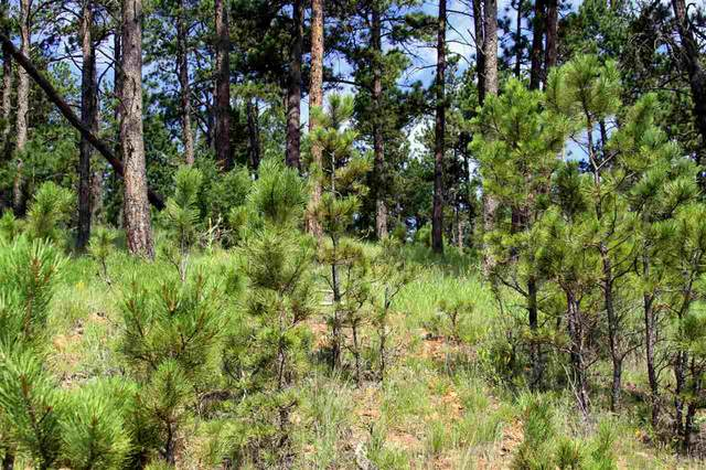 Lot 16 Wolf Lane, Hot Springs, SD 57747 (MLS #65377) :: Dupont Real Estate Inc.