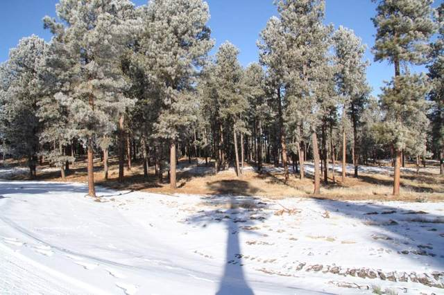 TBD Tin Cup Trail, Custer, SD 57730 (MLS #67056) :: Dupont Real Estate Inc.