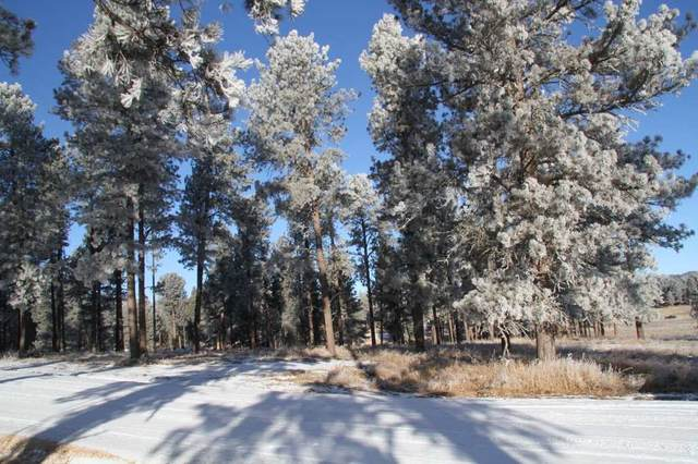 TBD Tin Cup Trail, Custer, SD 57730 (MLS #67058) :: Daneen Jacquot Kulmala & Steve Kulmala