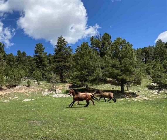 TBD Ghost Canyon Road, Custer, SD 57730 (MLS #68423) :: Christians Team Real Estate, Inc.