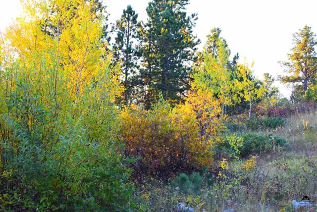 TRACT 1 Lot 2 Of South Dalo, Lead, SD 57754 (MLS #39069) :: Christians Team Real Estate, Inc.