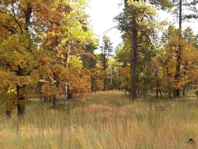 TBD Larkspur Road, Deadwood, SD 57732 (MLS #49689) :: Christians Team Real Estate, Inc.