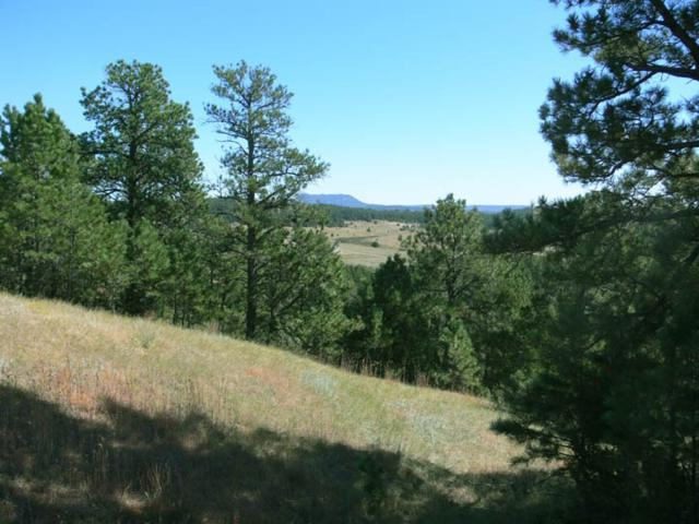 TBD Henry Trail, Sundance, WY 82729 (MLS #56014) :: Christians Team Real Estate, Inc.
