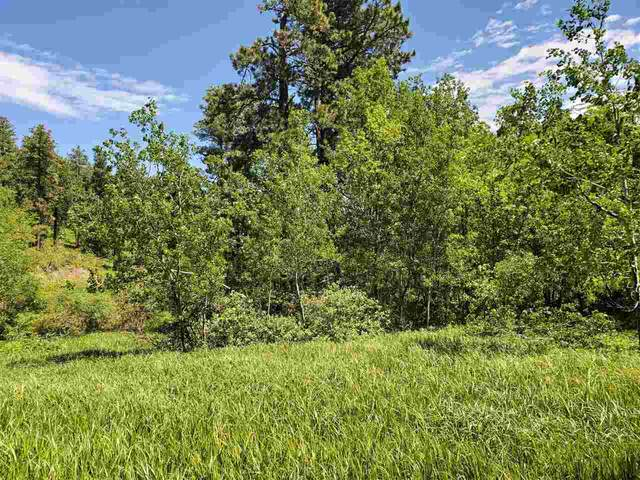 Lot 8 Ida Grey Road Drive, Lead, SD 57754 (MLS #60406) :: Dupont Real Estate Inc.