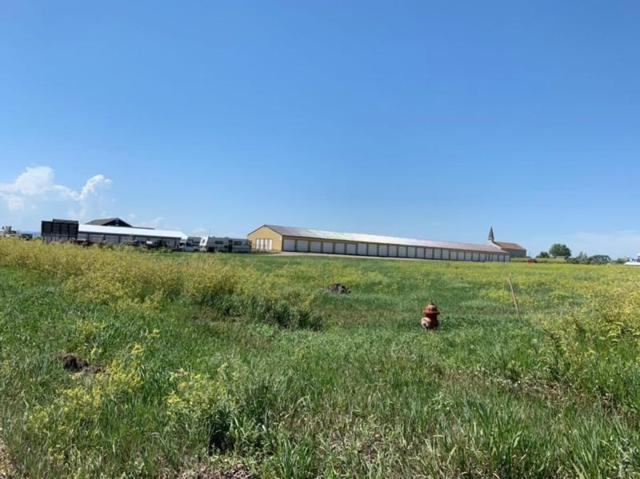 340 Cimarron Drive, Box Elder, SD 57719 (MLS #62141) :: Christians Team Real Estate, Inc.