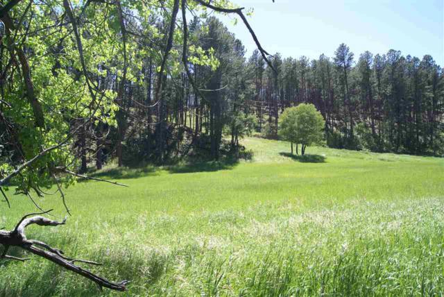 TR 4R Bowman Road, Custer, SD 57730 (MLS #57792) :: Christians Team Real Estate, Inc.