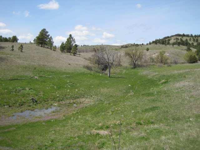 TBD Lame Johnny Road, Buffalo Gap, SD 57722 (MLS #31846) :: Christians Team Real Estate, Inc.