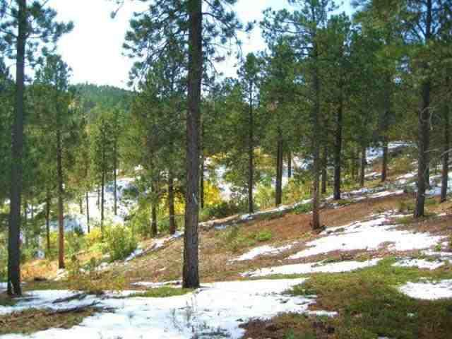 TRACT 2 Lot 2 Of South, Dalo, Lead, SD 57754 (MLS #39071) :: Christians Team Real Estate, Inc.