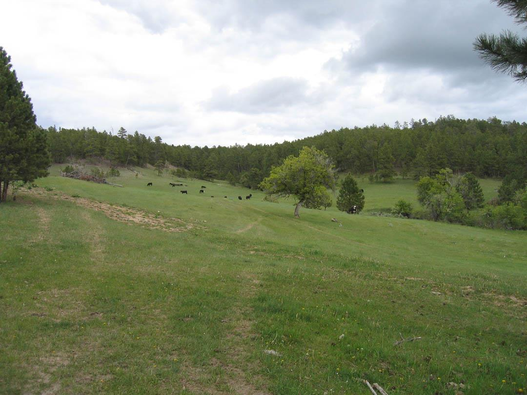 TBD Ruger Road - Photo 1