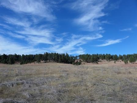 11902 Mountain Lion Lane, Custer, SD 57730 (MLS #49373) :: Christians Team Real Estate, Inc.