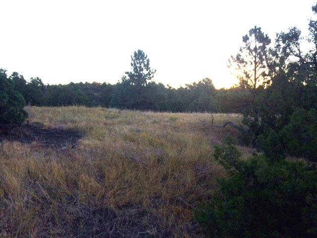 TBD Cimmaron Trail, Upton, WY 82730 (MLS #49575) :: Christians Team Real Estate, Inc.
