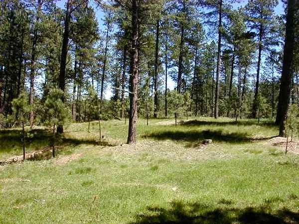 Lot 2 Address Not Published, Custer, SD 57730 (MLS #57713) :: VIP Properties