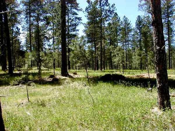 Lot 3 Jack Rabbit Road, Custer, SD 57730 (MLS #57714) :: Christians Team Real Estate, Inc.