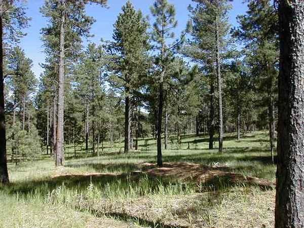 Lot 8 Dragonfly Drive, Custer, SD 57730 (MLS #57718) :: Christians Team Real Estate, Inc.