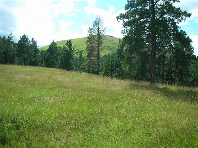 TRACT A Mattson Lane, Deadwood, SD 57732 (MLS #61020) :: Dupont Real Estate Inc.