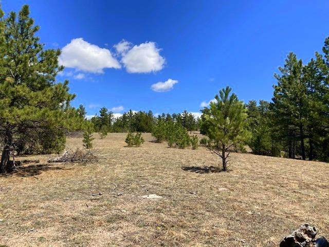 26596 20 Mile Road, Custer, SD 57730 (MLS #68220) :: Black Hills SD Realty